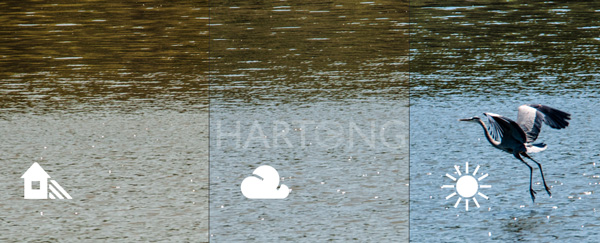hartong-heron-wb