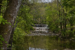 20150504 Sharon Woods Park Nature Photography walk, waterfall, wildflowers, Hamilton County, Cincinnati, DSLR how to take nature photographs, camera lesson. ©Malinda Hartong, Hartong Digital Media llc.