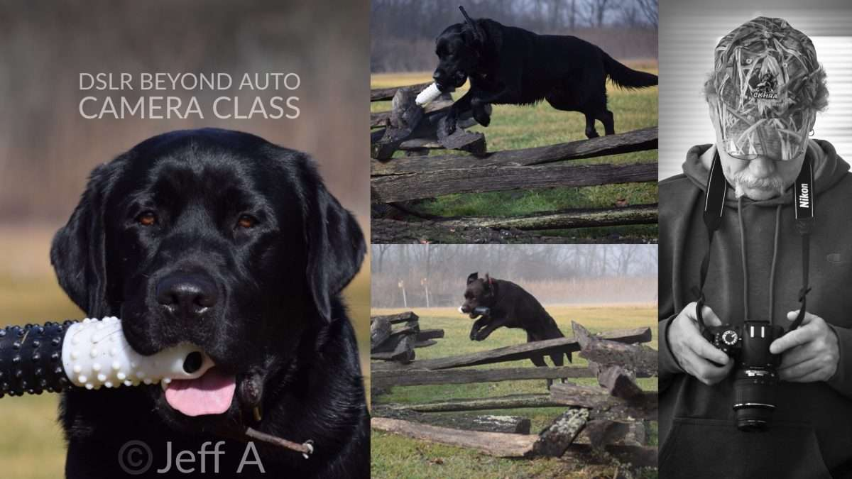 action photos of dog captured by participant after photo class